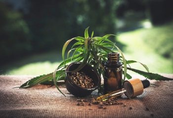 Tout savoir sur cette plante : le cannabidiol